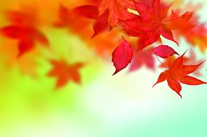 images mix outono inverno 268