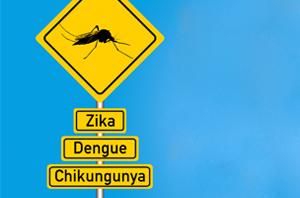 images dengueesse