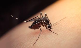 os-sintomas-de-dengue-chikungunya-e-zika