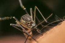 novartis-renova-compromisso-contra-a-malaria