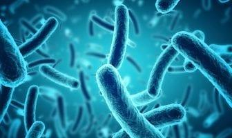 probióticos-como-essas-bactérias-agem-no-seu-intestino