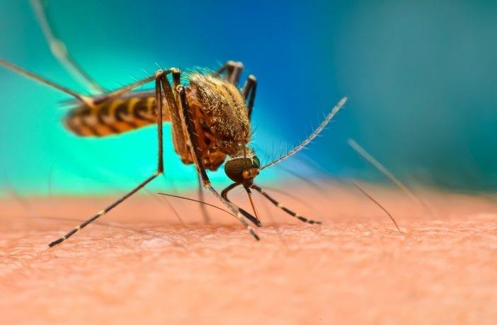 brasil-aprova-tafenoquina-em-dose-unica-para-cura-da-malaria