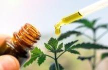 mitos-e-verdades-sobre-a-legalização-de-remédios-a-base-de-maconha