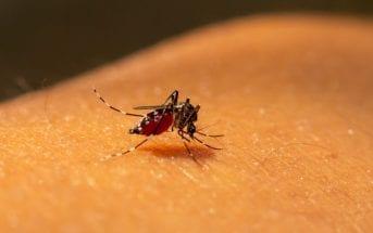 mesmo-em-tempo-de-coronavírus-cuidados-para-evitar-a-dengue-devem-ser-mantidos