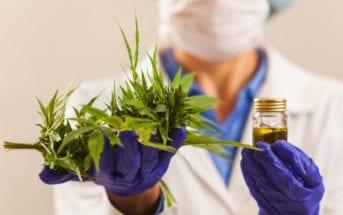 cannabis-medicinal-abre-oportunidades-para-pequenos-negocios
