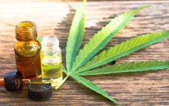 estudos-cannabis