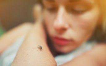 SBP dengue